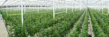 Modern Greenhouses with Ultra Air Conditioners